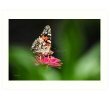 Painted Lady Butterfly Art Art Print
