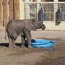 Zuri - Salt Lake City Zoo by aprilann