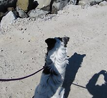 'ME & MY SHADOW'  Border Collie dog out for a walk.Evans Head. by Rita Blom