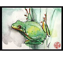 Green Tree Frog - watercolor and prisma pencil painting Photographic Print