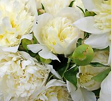 Peonies 5 by Tom  Reynen