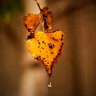 Autumn Leaves by ea-photos