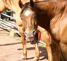 Silly, smiling horse (non)sense.... by Mary Fox