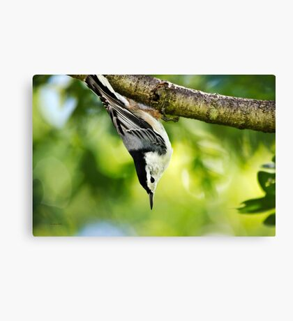 Wild Bird Canvas Print