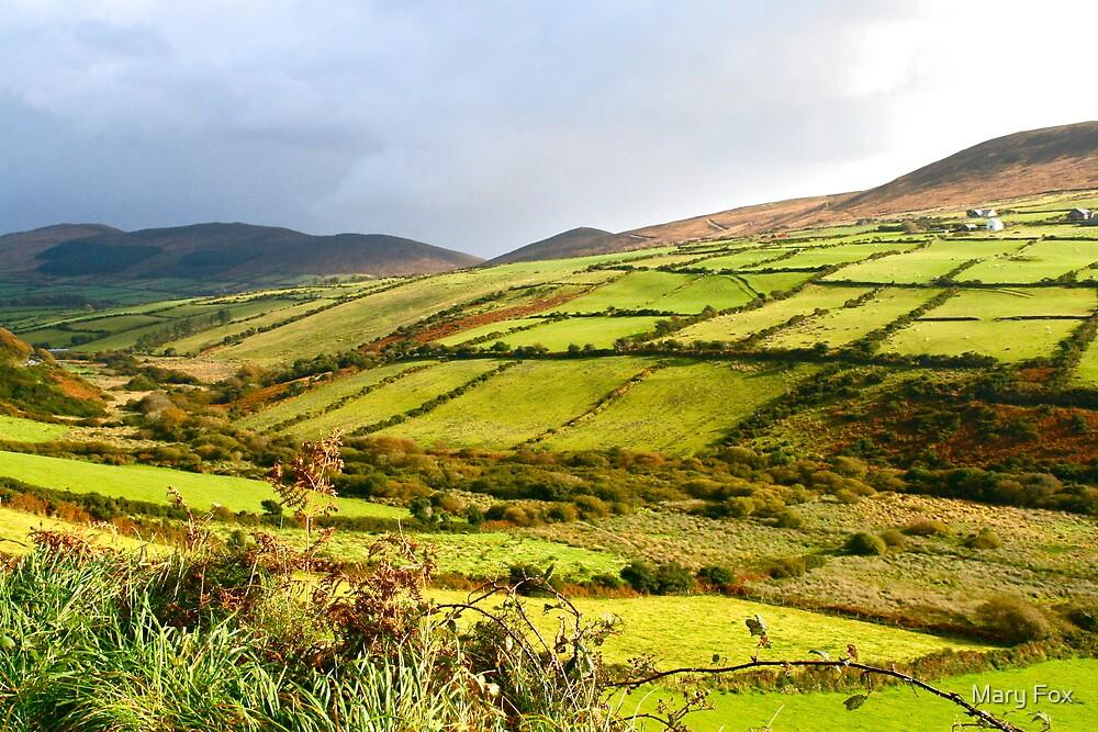 Irish Countryside by Mary Fox