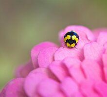 Pretty Ladybug by SunshineKaren