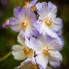 Rosa Canina by PhotosByHealy