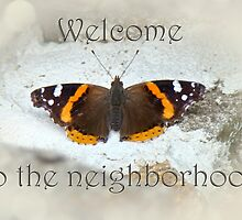 Welcome to the Neighborhood - Red Admiral Butterfly by MotherNature