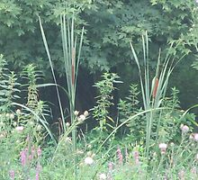 Cattail by Kenneth Vanover