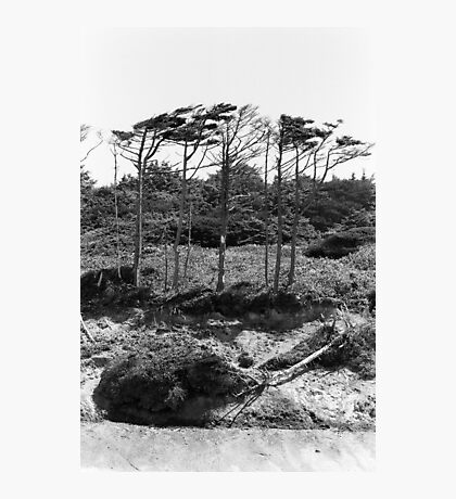 Coast trees Photographic Print