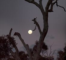 Super Moon Yesterday (May 6) by shortshooter-Al