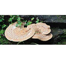 Pink Mushroom in Ireland Photographic Print