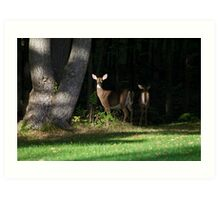 Hindsight Whitetail Deer Art Art Print
