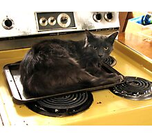 Cat Baked Photographic Print