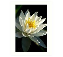 Waterlily Tropical Flower Art Art Print