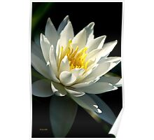 Waterlily Tropical Flower Art Poster