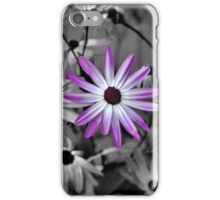 African daisies - selective colour iPhone Case/Skin