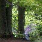 ❤‿❤  . Nostalgic green dream. Welcome to Lemkivshchyna (Ukrainian: Лeмкiвщина, Lemko: Lemkovyna (Лeмкoвина),: (Łemkowszczyzna). Tribute to Andy Warhol ! Featured a World of EOS. Fav: 3 Views: 697 . by © Andrzej Goszcz,M.D. Ph.D