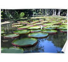 Botanic Gardens Mauritius Poster