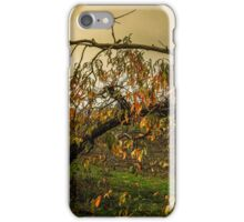 Fall Colors #2341 iPhone Case/Skin