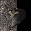 Possum Tree Play by Emma Holmes