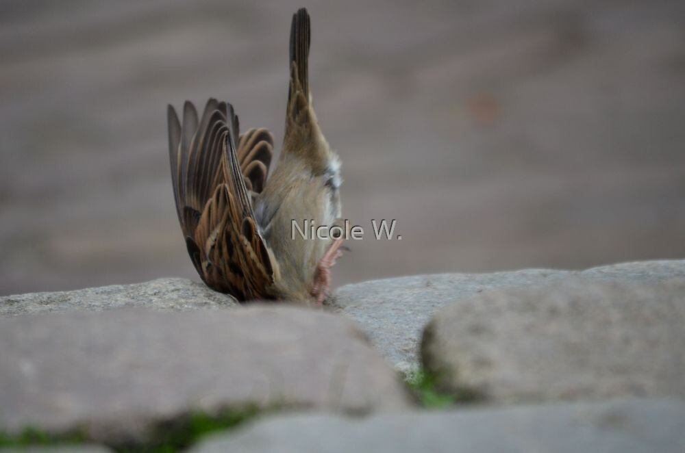 the famous up-side-down sparrow by Nicole W.