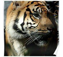 Closeup shot of tiger Poster