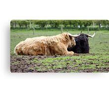 HIGHLAND COWS . Canvas Print