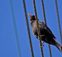 Like A Bird On A Wire ... by RosiePosie