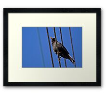 Like A Bird On A Wire ... Framed Print