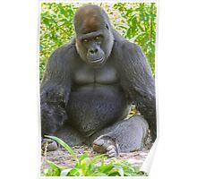 Gorilla 02 Poster