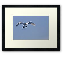 Flaps Down! Framed Print