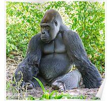 Gorilla 03 Poster