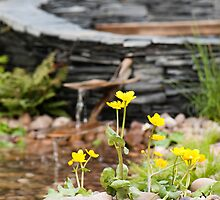 Marsh Marigolds by Anne Gilbert
