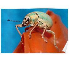 Bug on bag Poster