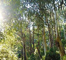 Lyrebird Forest by Sarah Trett
