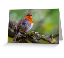 Red chested Robin Greeting Card