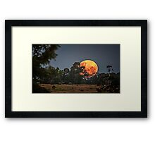 Peeking Through.. Framed Print