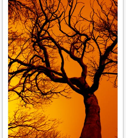 Scorched Tree Sticker