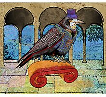 Well Dressed Raven Photographic Print