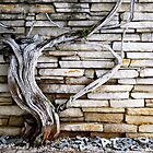 Wood and Stone by Timothy State