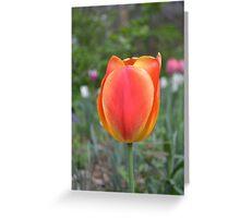 One Orange Tulip Greeting Card