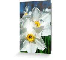 Double Daffodil Fun Greeting Card