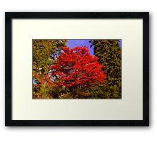 Mount Wilson - Autumn Spectacular Framed Print