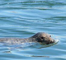 Saturday Afternoon Swim by kgarrahan