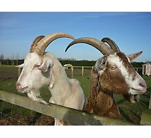 Two goats Photographic Print
