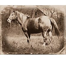Cowboy, Appaloosa Gelding Photographic Print
