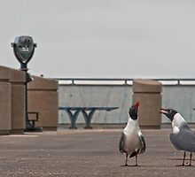 What are you laughing about? by Debra Fedchin