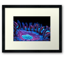 Marine flower Framed Print