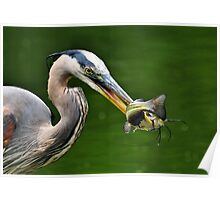 Success And The Great Blue Heron Poster